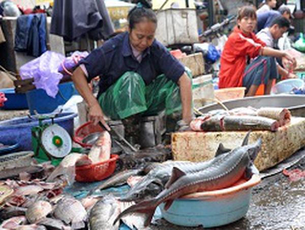 Hà Nội: Cá bán tại chợ đầu mối ở đâu mà ra?