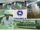 [Inside Factory] Khám phá những máy móc khổng lồ bên trong nhà máy sữa Vinamilk