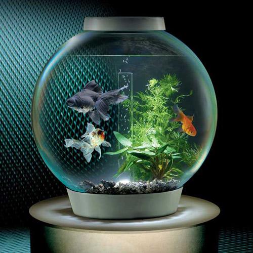 Bể cá hình tròn được cho là tốt nhất theo phong thủy.