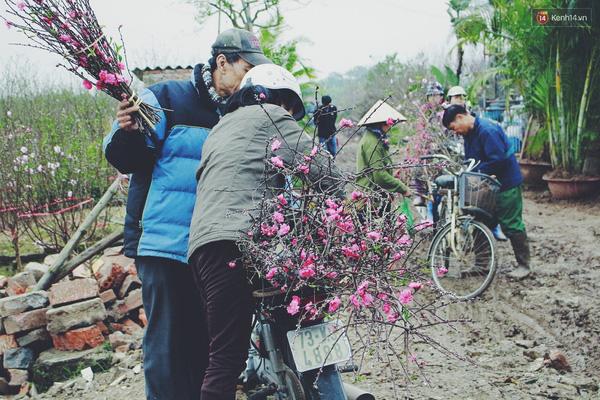Thời tiết thất thường khiến người dân Nhật Tân kẻ cười, người khóc vì có nhà được mùa, có nhà không.