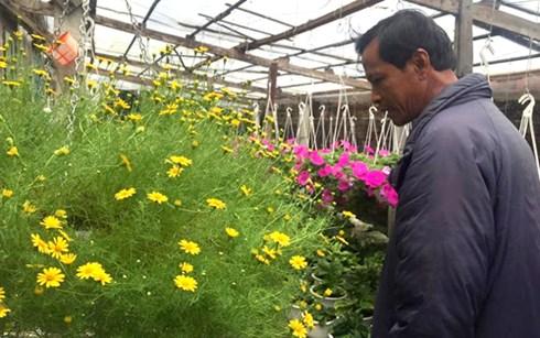 Còn nửa tháng nữa mới đến Tết nhưng vườn hoa nhà ông Lệ đã nở gần hết.