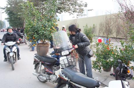 Cây quất anh Hải Lâm vừa mua với giá 200.000 đồng, nếu mua hôm qua, anh sẽ phải mua với giá 300.000 đồng.