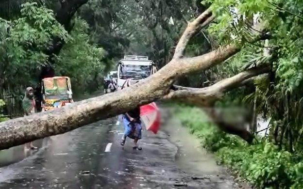 Cây cối bị bão quật đổ ở Bangladesh - Ảnh: bdnews24.com