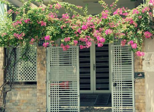Với cửa làm bằng sắt thì cây hoa giấy là lựa chọn thích hợp nhất
