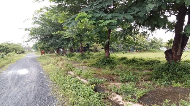 Hình ảnh thường thấy ở bất kỳ một dự án khu dân cư không có dân sinh sống trên địa bàn tỉnh Long An.