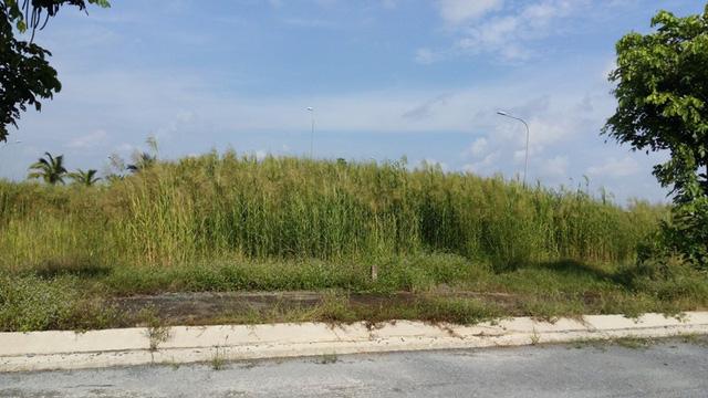 Dự án khu tái định cư - thương mại của tập đoàn Quốc tế Năm Sao đầy cỏ dại.