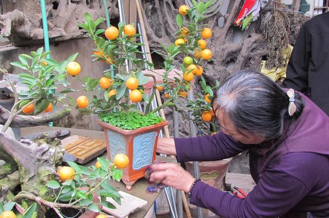 """Cây quất thế được trồng trong chậu cảnh có chữ """"Thuận buồm, xuôi gió"""" được nhà vườn bán với giá 1,4 triệu đồng. Ảnh: VGP/Đỗ Hương"""