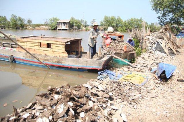Nông dân xót xa đổ vỏ hàu lên bờ - Ảnh: Mậu Trường