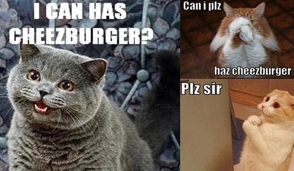Chàng trai kiếm hàng triệu USD từ ảnh chế hài hước của mèo