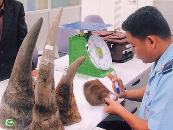 Có bảo kê đưa sừng tê giác vào Việt Nam