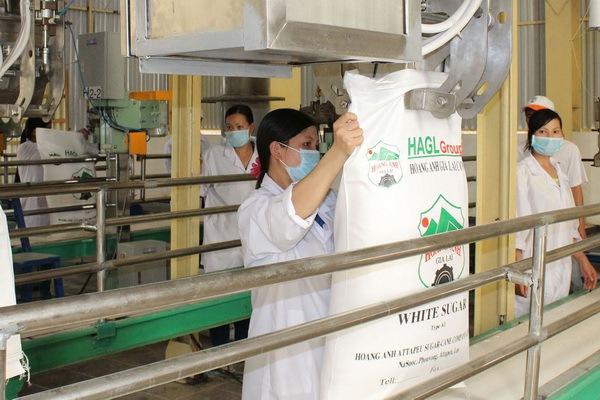 Doanh nghiệp mía đường trong nước đói kém, HAGL bội thu