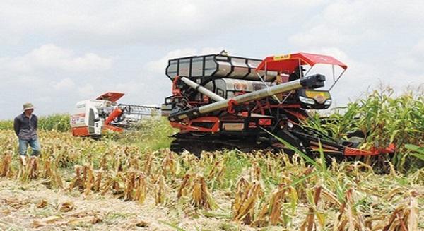Nghịch lý: Xuất khẩu gạo chưa bằng 1/2 kim ngạch nhập khẩu thức ăn chăn nuôi