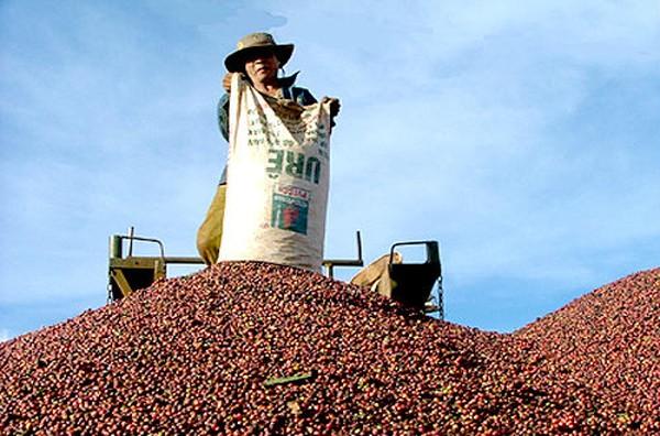 Báo Tây nhận xét về cà phê Việt: Một hiện tượng thú vị!