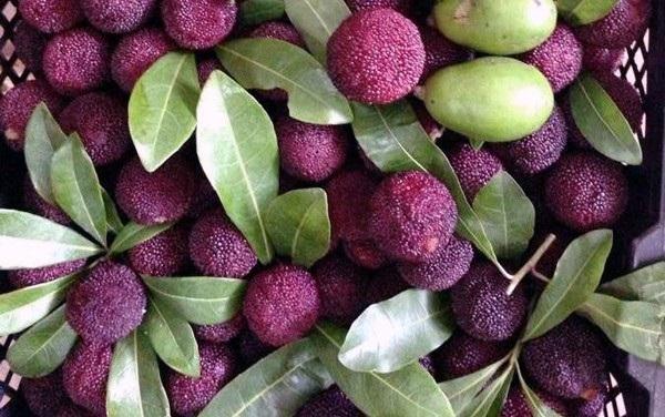 Dân Hà Nội chi tiền triệu ăn trái cây rừng