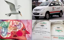 [Nổi bật] 'Con chim thứ hai' của Trung Nguyên, Vinasun bành trướng