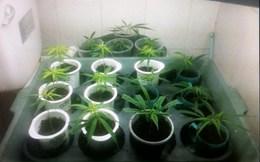 Choáng với 'công nghệ' trồng cần sa trong nhà vừa phát hiện tại Hải Phòng