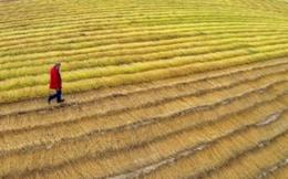 Nông dân Pháp trước 'bài toán' giảm dùng thuốc trừ sâu
