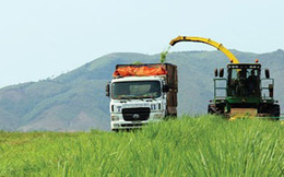 Đại gia Việt rủ nhau đi trồng cỏ nuôi bò
