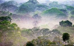 Xứ sở bóng đá Brazil đã ra tay cứu lá phổi Amazon như thế nào?