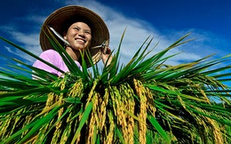 [BizChart] Người Việt mua gì, bán gì nhiều nhất với thế giới 6 tháng vừa qua?
