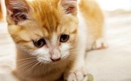 Ngân hàng lớn nhất Nga câu khách bằng... mèo