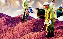 Cà phê Việt: Doanh nghiệp nội ngậm đắng, doanh nghiệp ngoại bành trướng