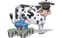 Bò sữa Vinamilk và Nước chấm Masan: Cứ 100 đồng thu về lãi ngay 20 đồng
