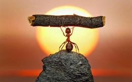 Muốn thành công: Hãy học cách chấp nhận thất bại