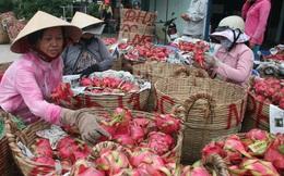 Trái cây Việt: 'Ăn tươi, nuốt sống' và điệp khúc được mùa, rớt giá