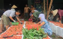 Xuất hiện vải Trung Quốc 'ngọt như đường hóa học' ở Việt Nam