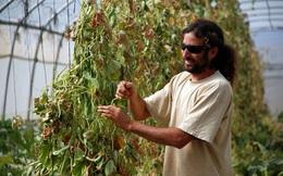 Đưa nhiều công nghệ nông nghiệp của Israel đến Việt Nam