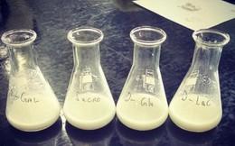 Đã điều chế thành công Sữa bò nhân tạo