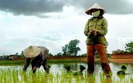 Vì sao người Việt Nam sống trong nước nông nghiệp nhưng phải ăn gạo giá cao?