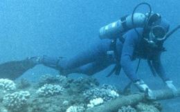 Ngày 30/7 nối xong cáp quang biển, khôi phục Internet
