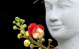 Hoa thiêng nơi cửa Phật