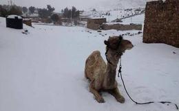 Tuyết rơi tại thủ đô Ai Cập lần đầu tiên sau 112 năm