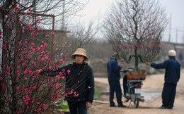Dân bất động sản đi làm xe ôm kiếm Tết