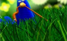 Khi chim dậy sớm không bắt được sâu